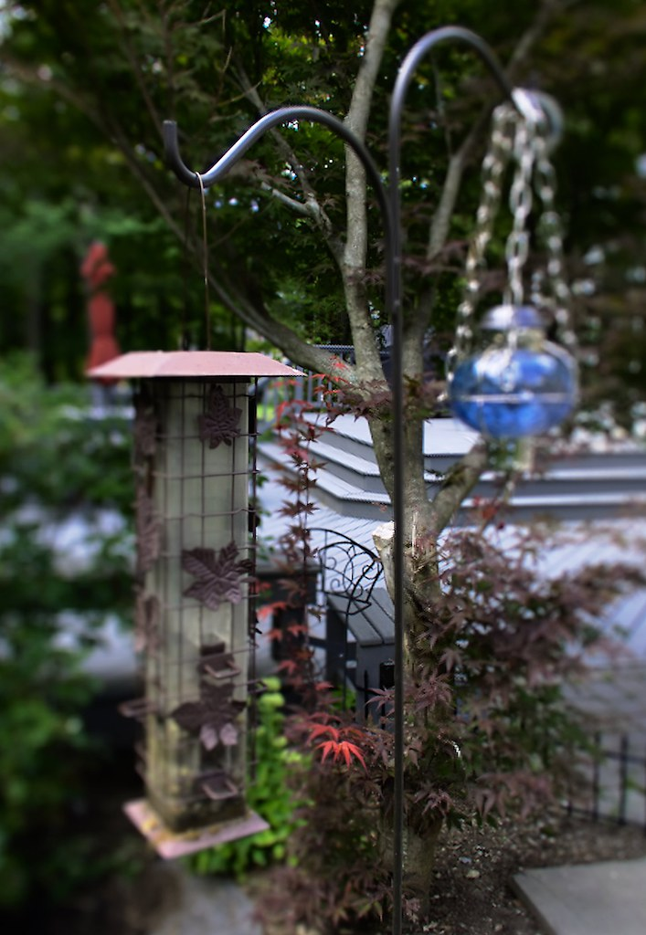 Bird Feeders (f/2.0; Lytro Illum)